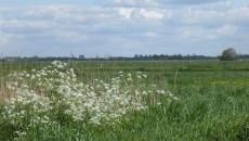Natuurgebied Ruygeborg